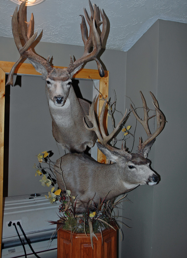 2 Deer Pedestal Mounts Pictures To Pin On Pinterest