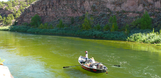 Green river fly fishing wading for Green river fly fishing report